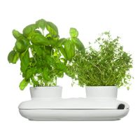 Двойной горшочек для полива свежих трав SAGAFORM, 5015859