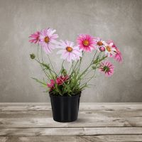 Декоративный цветок SILK-KA «Маргаритка в горшке» 35 см 102685