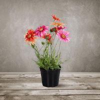 Декоративный цветок SILK-KA «Маргаритка в горшке» 102686