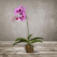 Искусственная «Орхидея» SILK-KA 49 см 104528