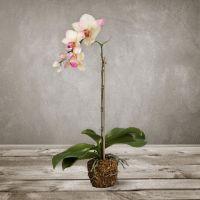 Искусственная «Орхидея» SILK-KA 104530