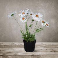 Декоративный цветок SILK-KA «Маргаритка в горшке» 35 см цвет белый 102684