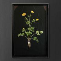 Постер Жёлтый цветок TO-AIBTC381PFFRFTZ