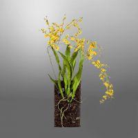 Искусственная «Орхидея» SILK-KA 140 см 104759