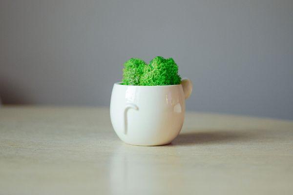 Набор для выращивания Eco мини-кашпо «Мышка» MIN-1-04